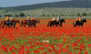 horse-riding holidays in Tuscany