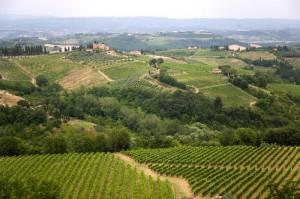 vigneti vernaccia san gimignano 300x199 Vernaccia of San Gimignano: a collectible wine!