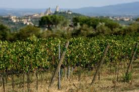 vigne San Gimignano is increasingly greener