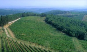 Chianti Classico Wine Region Tuscany 300x181 The legend of Gallo Nero